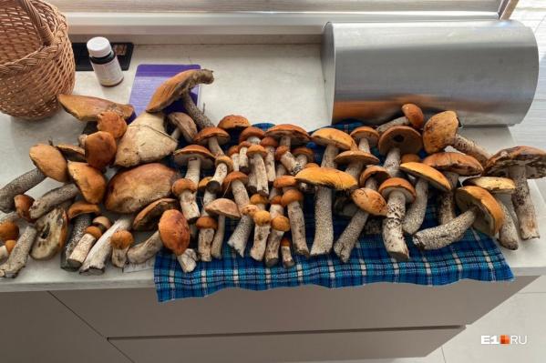 Столько грибов насобирала наша читательница в селе Балтым (Верхняя Пышма)