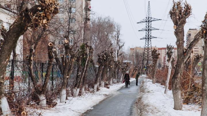 Тюменские власти потратят 10 миллионов рублей на стратегию по озеленению города
