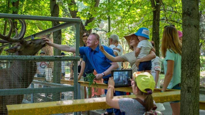 Город в городе: о том, как живет Ростовский зоопарк, рассказал директор Александр Жадобин