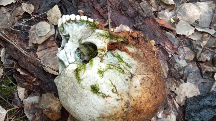 В Тюмени грибник нашел человеческий череп