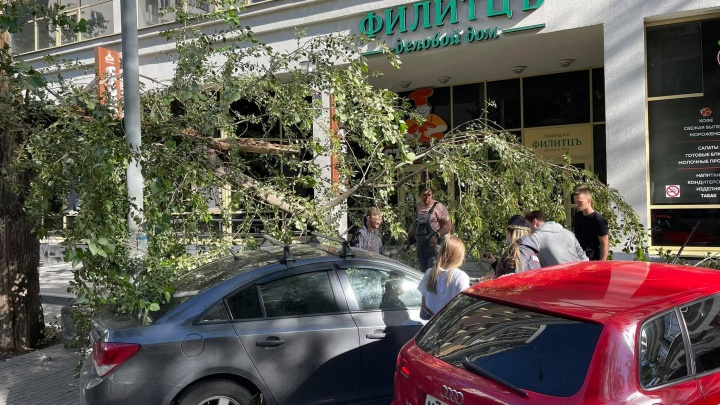 В Екатеринбурге сильный ветер валит деревья