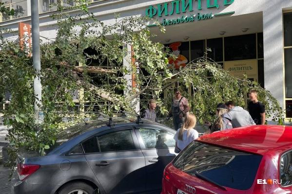 Дерево упало на автомобили у делового дома «Филитцъ»