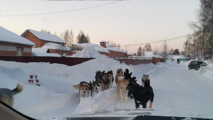 Суд обязал власти Советского района построить приют для бездомных собак после жалоб жителей