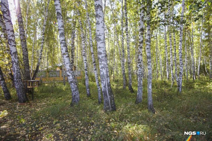 Участок Юрия граничит с лесом. Площадь 18 соток, и из них треть — это березовый лес. Дом прижали максимально к лесу
