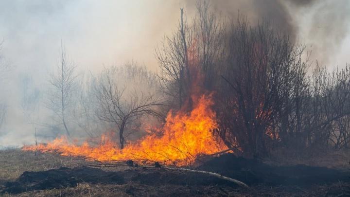 Леса горят, смог затянул Тюмень: всё про пожары в регионе