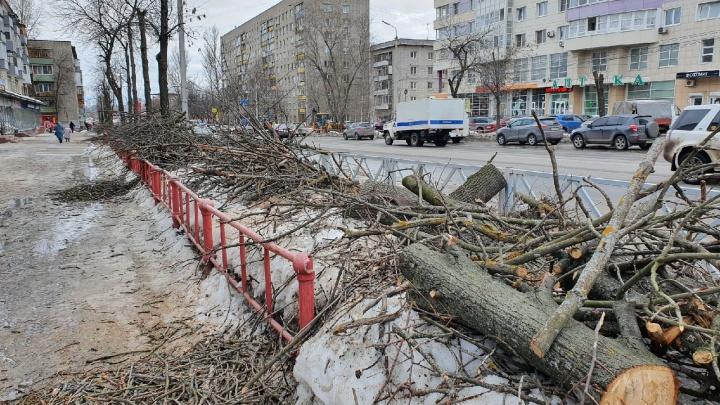 Массовую вырубку деревьев в Ярославле объяснили подготовкой к лету