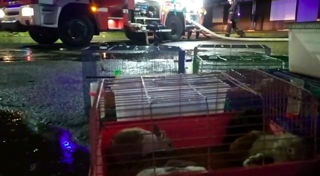 В центре Краснодара произошел пожар на зоорынке