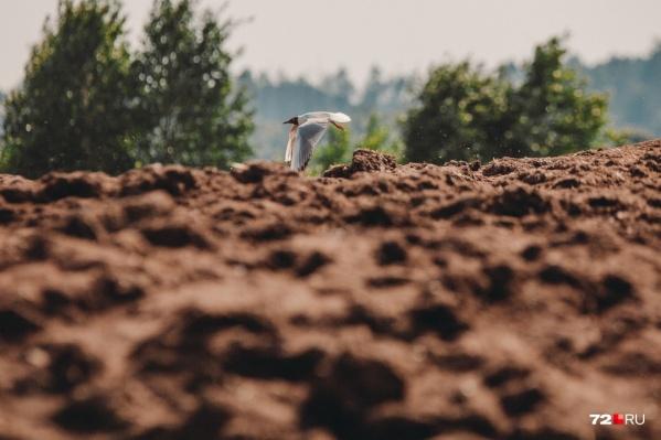 Свалка куриного помета беспокоит жителей Боровского несколько лет