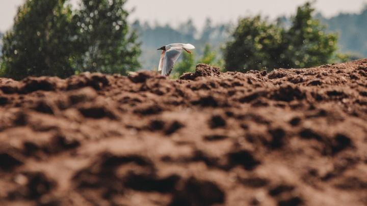 Боровскую птицефабрику опять обвинили в загрязнении почвы куриным пометом — в ней нашли кишечную палочку