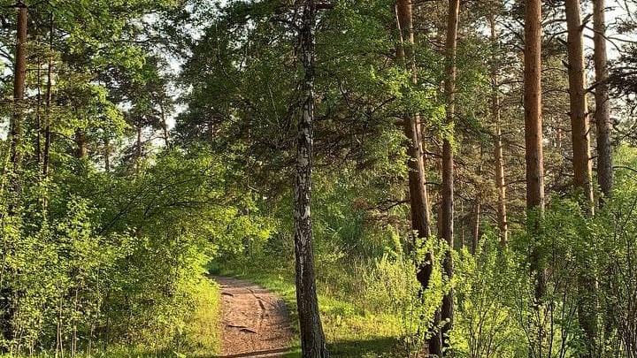 В Заельцовском парке появятся велодорожки, экотропы и трассы для скандинавской ходьбы