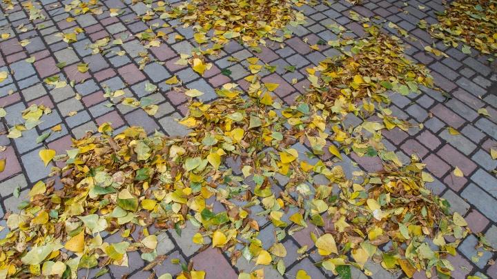 И от осени не спрятаться, не скрыться: смотрим погоду в Волгограде на ближайшую неделю