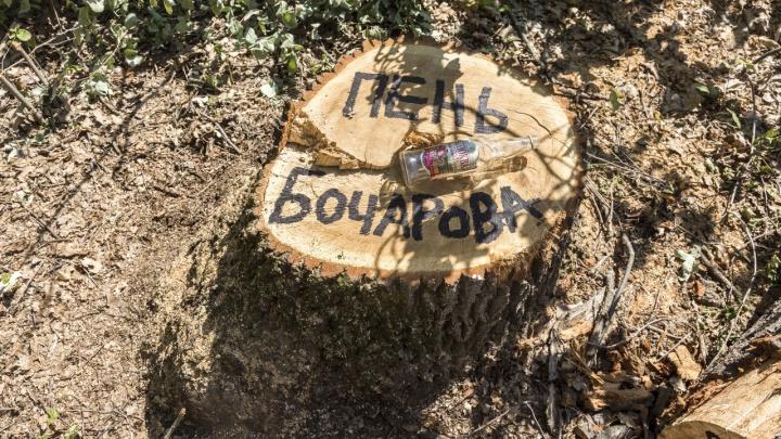 «Пусть это будут надгробия коррупции»: защитники дубов присвоили пням имена чиновников Волгоградской области