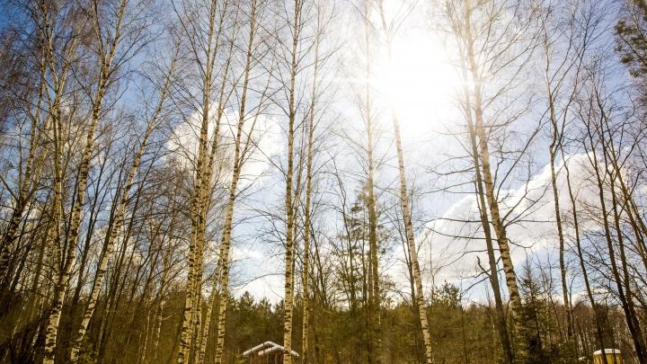 Зима, прощай! Синоптики предупредили ярославцев о мощном потеплении