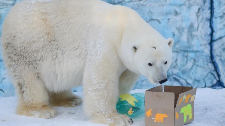 В зоопарке рассказали, почему о раке у Умки узнали только после его смерти
