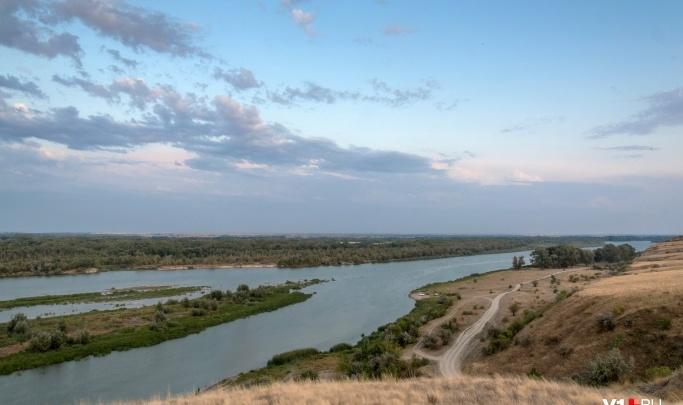 «Когда-то тут лилии росли, а теперь пруд умер»: в пруд в Волгоградской области сбросили туши чумных свиней