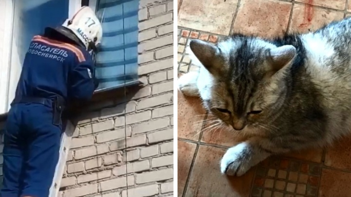 В Новосибирске кошка застряла задней лапой в окне — видео, на котором ее вызволяют спасатели