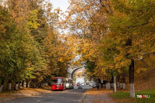 Пока в Ярославле всё серое, но впереди — золотая осень