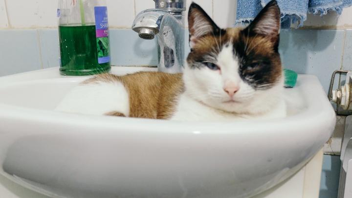 У вас воду отключили? В Екатеринбурге стартует новый этап опрессовок