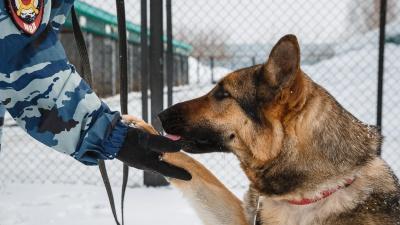 «Они никогда не ошибаются»: как воспитывают служебных собак в Кемерово (много милых фото внутри)