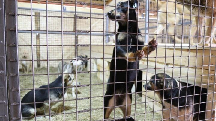 В волгоградском горпитомнике достроили еще один вольер для бездомных собак