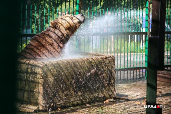 """Прохладный душ <nobr class=""""_"""">для косолапых —</nobr> настоящее блаженство"""