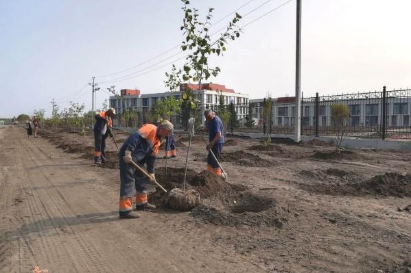 В августе более 300 деревьев посадили у нового кадетского корпуса