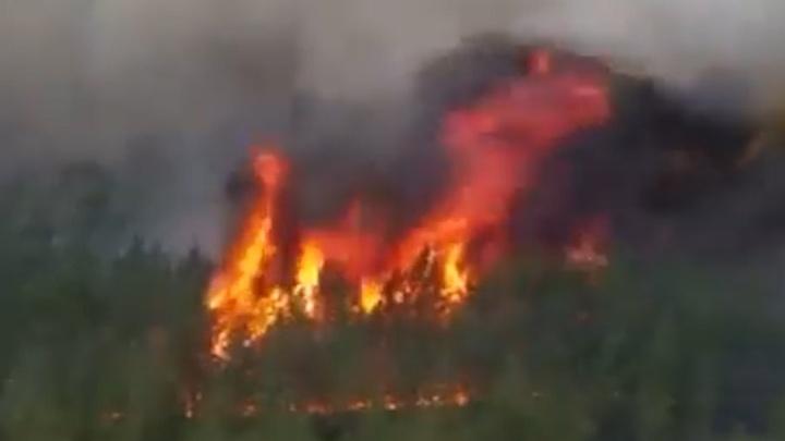 На юге Челябинской области зафиксировали 1700 очагов возгорания. Весь масштаб бедствия — в одной картинке