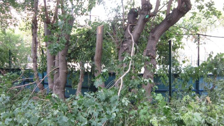 «Варварство какое-то»: в центре Челябинска спилили кроны у 40 деревьев