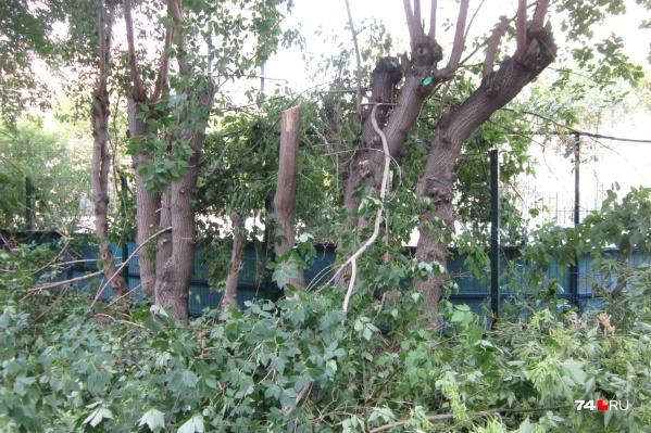 Без ветвей остались деревья, высаженные по периметру спортивной площадки в одном из центральных дворов