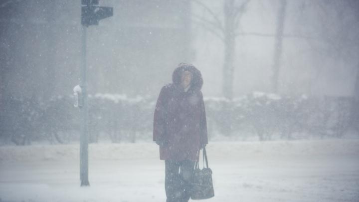 Новосибирск накроет метель с сильным ветром— непогода продлится минимум сутки