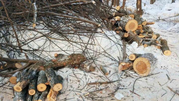 Власти Самары ответили на претензии о вырубке деревьев в Сорокиных Хуторах