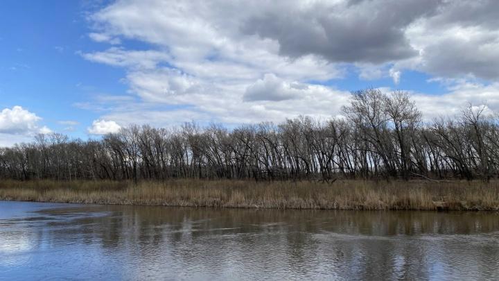 «Май будет теплым»: Илья Винштейн опубликовал прогноз на третий месяц весны в Кургане
