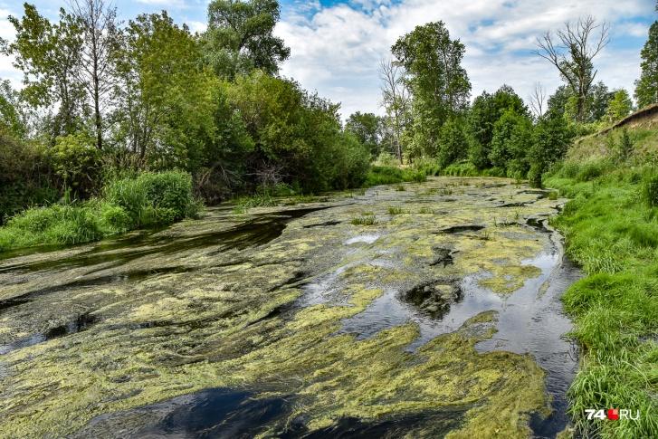 В этом году воды совсем мало и Теча заросла тиной. Жители боятся, как бы не пересохла, обнажив радиоактивное дно