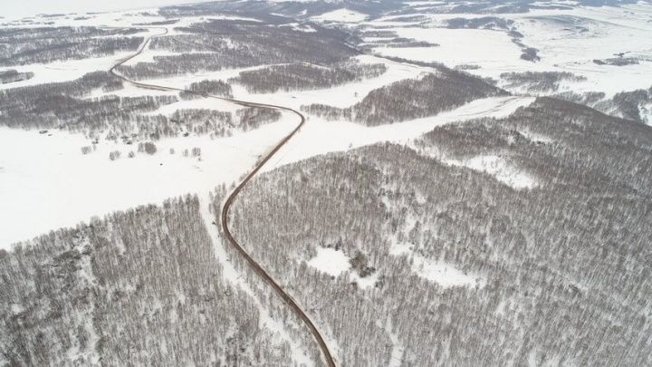 В Красноярском крае руководитель лесничества оформлял лесные участки на подставных лиц и попался