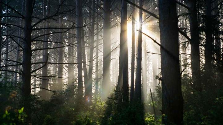Прокуратура проверит, насколько законна санитарная рубка леса в Красноярке
