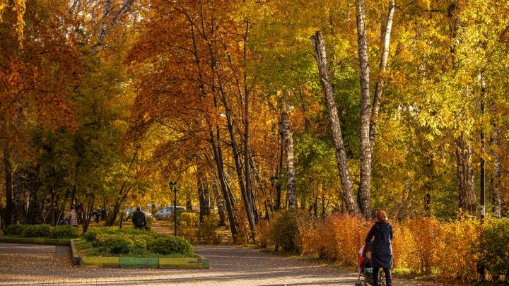 В Новосибирске ожидается потепление до +12 градусов