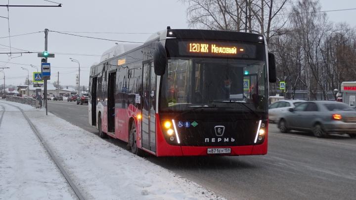 Минтранс запустил два новых автобусных маршрута. Частные перевозчики считают их незаконными