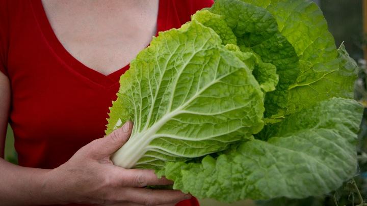 Еще успеваете: 8 овощей и трав, которые вырастут на грядке даже осенью
