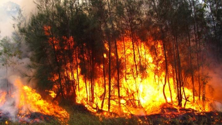 В Самарской области силовики начали доследственную проверку по пожару в Борском районе