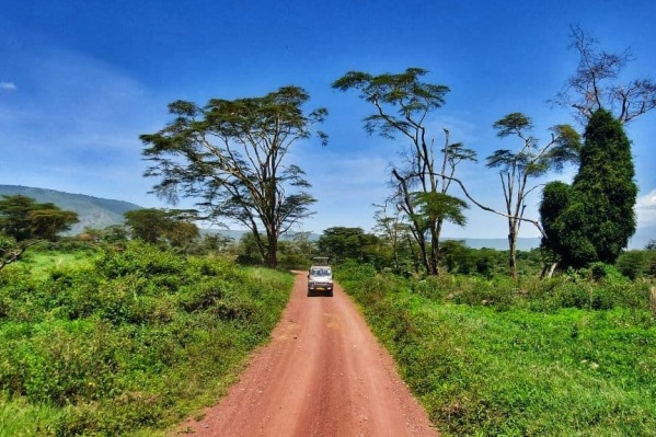 За африканской природой лучше ехать на материк