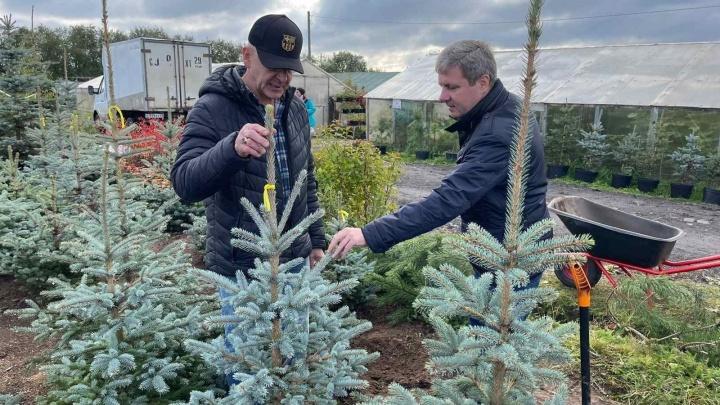 В Архангельске посадят молодые деревья, какие — выбрал глава города Дмитрий Морев
