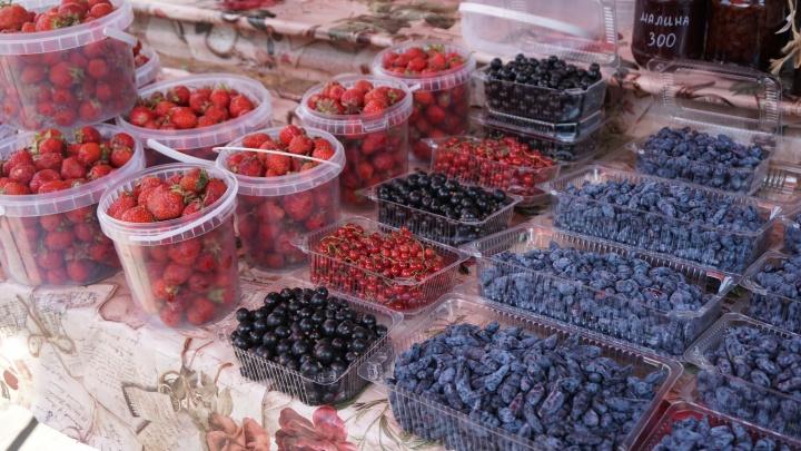 В Новосибирске развернулась ягодная торговля — где и за сколько можно купить клубнику, смородину и крыжовник