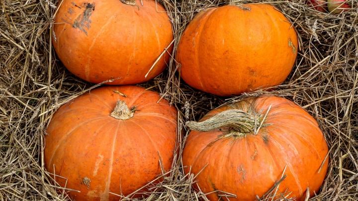 «Осеннее настроение»: рецепты простых, вкусных и сытных блюд из тыквы