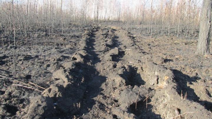 В Тюменской области грибника накажут за случайный поджог леса. Мужчина заплатит за это 700 тысяч