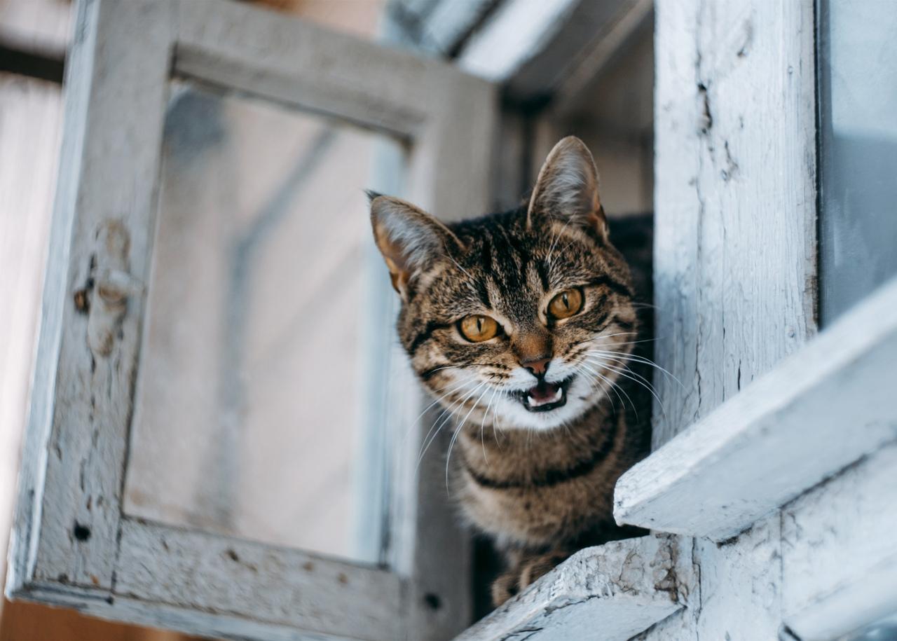 Этот котик выглядит как злая консьержка