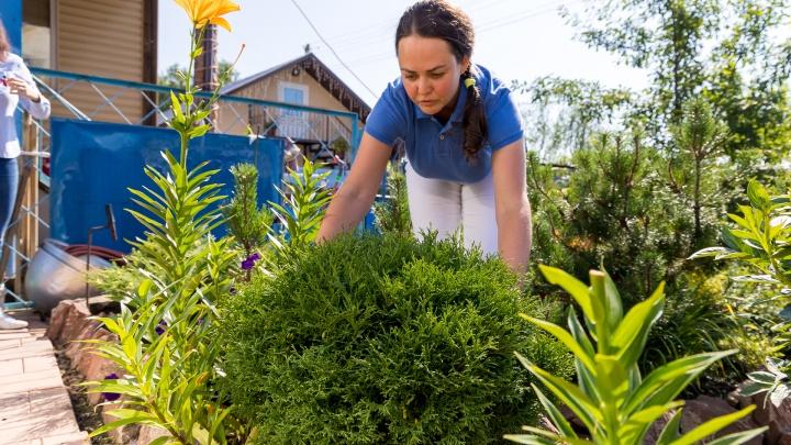 Роскошный сад с хвойниками и пышные гортензии в горшках: лайфхаки для сибирских садоводов