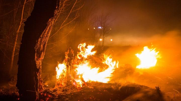 «Ущерб 58 миллионов рублей»: в Зауралье по факту лесного пожара возбудили уголовное дело