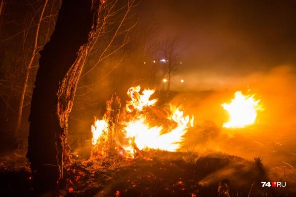 В Курганской области отмечено уже несколько крупных лесных пожаров