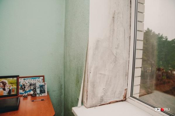 Стены дома постоянно обрастают плесенью