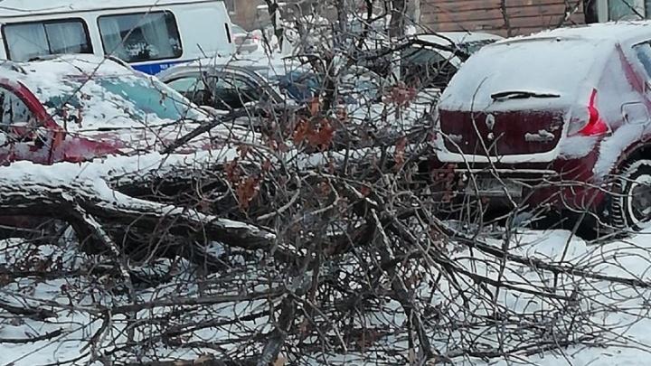 В Волжском заснеженное дерево рухнуло на женщину